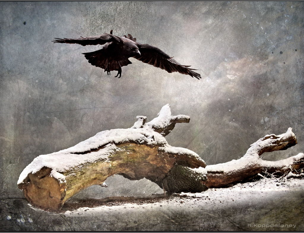 Image: 'Crow and Tree - Heaven and Earth in Winter,' by H. Kopp Delany (Hartwig HKD)