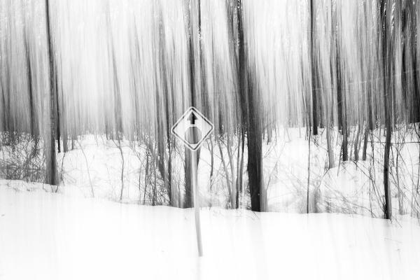 'Sign in Woods,' by user 'dibytes' (Diane Hammond) on Flickr