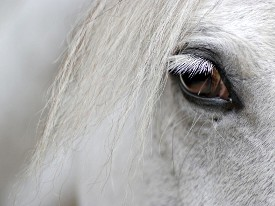 White horse, up close and personal