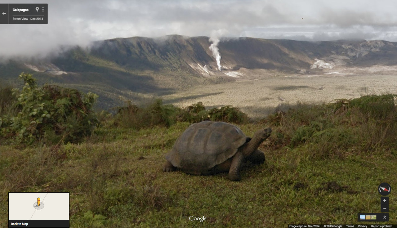 Screen capture: Google Street View of Galapogos tortoises