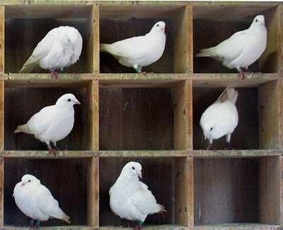 Pigeons in holes (thanks, Wikimedia!)