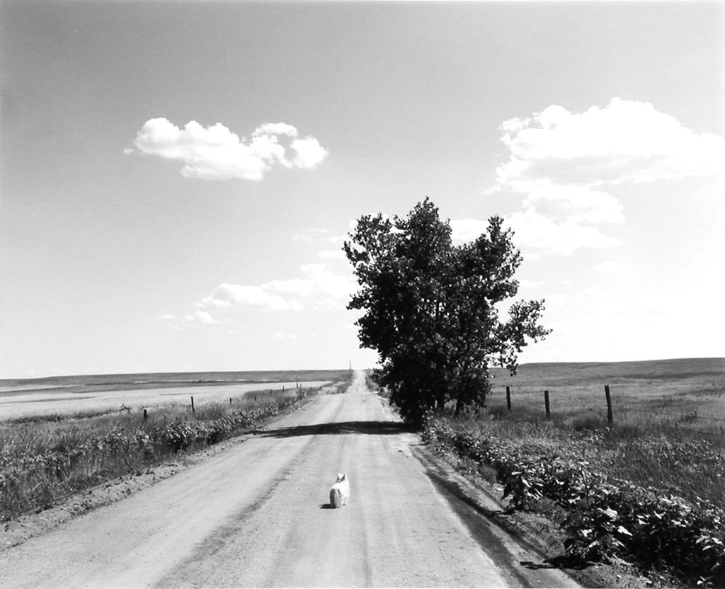 'Sally, Weld County, Colorado' (1984), by Robert Adams